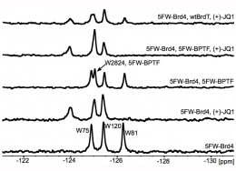 Figure 2*: 19F NMR titration of (+)-JQ1 with Brd4(1). Bottom to top: 5FW-Brd4(1) (25 μM); with 1 eq. (+)-JQ1; with 5FW-BPTF (25 μM); with 5FW-BPTF (25 μM) and 1 eq. (+)-JQ1, with unlabeled BrdT(1) (50 μM) and 1 eq. (+)-JQ1.