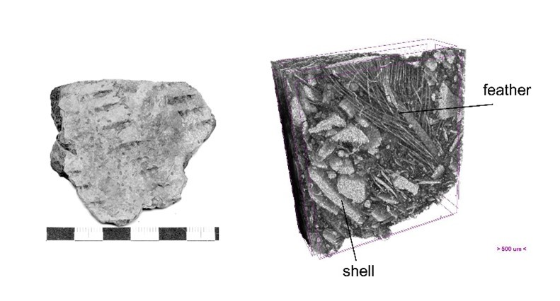 Pores resulting from crushed shells and feathers in a ceramic sherd