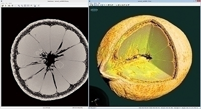 Reconstructed slice and volume rendering of the inside of a lemon