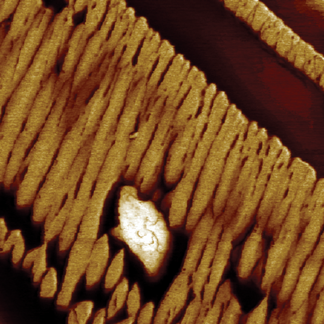 MultiMode 8-HR AFM - Modulus map of Polydiethylsiloxane Imaged Using PeakForce QNM