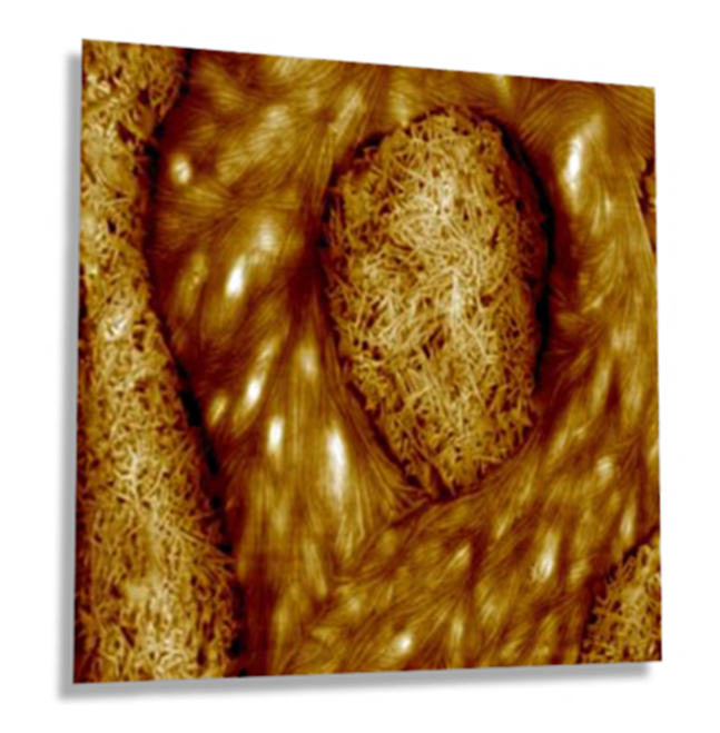 MultiMode 8-HR AFM - sPP and PEO Blend Imaged with PeakForce-HR