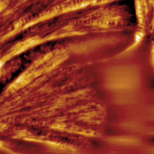 Dimension FastScan AFM - Temperature Control and Thermal Analysis