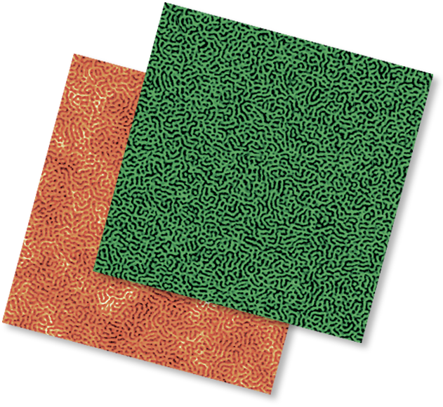 High-Resolution Topography and Phase Image of Triblock Copolymer