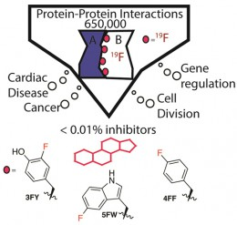 "Figure 1*: PPIs have essential biology and are linked to many diseases. The Pomerantz lab uses fluorinated amino acids to discover small molecules for ""undruggable"" PPIs."