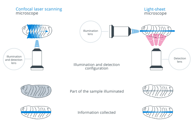 Comparison of Confocal Microscopy and Light-Sheet Microscopy
